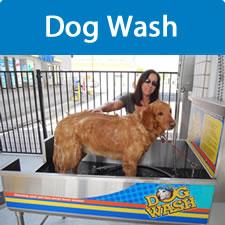 dog_wash