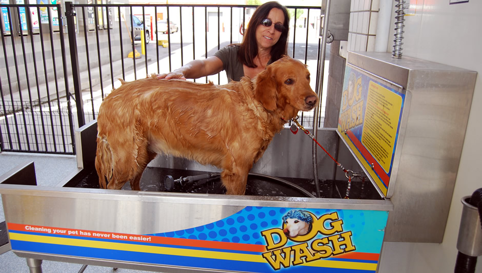 Dog Wash - woman washing her dog