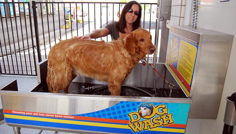 Dog Wash - woman washing her dog